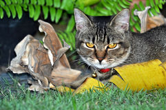 lugna katt royaltyfri bild