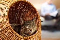 Lugna lördag hemma med katten Arkivfoto