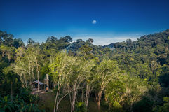 Lugna landskap för aftonvildmarkskog i Thailand Arkivfoto