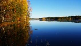 Lugna landskap Skogen reflekterar från vattnet royaltyfria foton