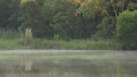 Lugna morgon vid sjön med lägre hängande dimma på vattenyttersidan stock video