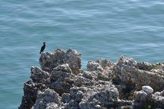 Lugna och kristallklart havsvatten som observeras av kormoran för att fiska arkivfoton