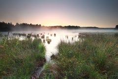 Lugna soluppgång på dimmig hed royaltyfri bild