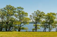 Lugna sommarlandskap - träd på banken av floden mot den blåa himlen royaltyfri bild