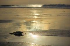 Lugna strand Royaltyfria Bilder