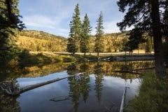 Lugna vatten av träskliten vik, med reflexioner, Yellowstone Nati Arkivfoton