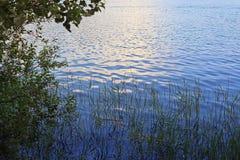 Lugna vatten med att reflektera för solljus som omges av vasser och trädfilialer royaltyfria bilder