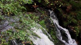 Lugna vattenfallet under September i Skottland, lugna Vattnet av liv stock video