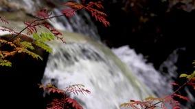 Lugna vattenfallet under September i Skottland, lugna Vattnet av liv Buar nedgångar stock video