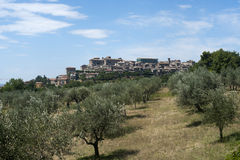 Lugnano in Teverina (Italy): Old town. Lugnano in Teverina (Umbria, Italy): Old town and olive trees Stock Photography