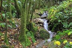 Lugo - waterfall Stock Images