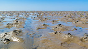 Lugworm casts on mudflats of Waddensea at low tide, Netherlands Royalty Free Stock Photography