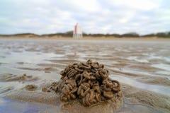 Lugworm obsada na piasek plaży obrazy royalty free