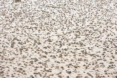 Lugworm obsady na plaży fotografia stock