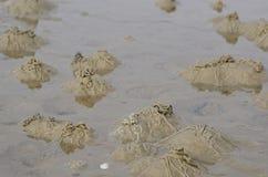 Lugworm or sandworm, Arenicola marina Stock Photos