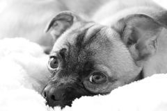 Lui weinig hond royalty-vrije stock foto