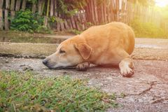 Luie hond Royalty-vrije Stock Foto