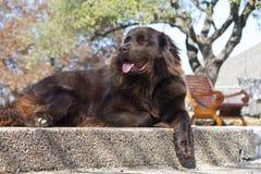 Luie Hond royalty-vrije stock afbeeldingen