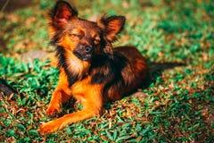 Luie hond in de ochtend stock foto