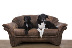 Luie honden royalty-vrije stock afbeelding