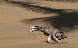Luie hondslaap bij tropisch strand stock afbeeldingen
