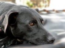 Luie hondvriend stock foto