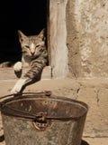 Luie kat in Afrika Royalty-vrije Stock Fotografie