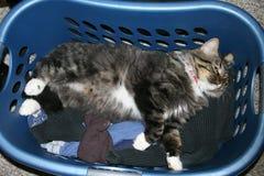 Luie kat in wasmandslaap op warme schone kleren 1 royalty-vrije stock foto's