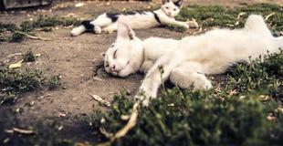 Luie Katten Royalty-vrije Stock Afbeeldingen