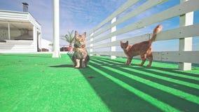 Luie katten die dichtbij het hotel op zee leven stock videobeelden