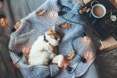 Luie kattenslaap op wollen sweater stock foto's