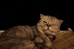 Luie kattenzitting stock fotografie