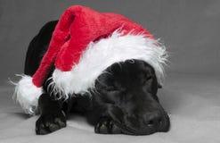 Luie Kerstmis Labador royalty-vrije stock afbeelding