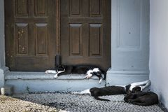Luie Middag Catnap royalty-vrije stock fotografie
