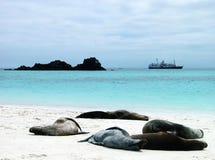 Luie sunbathers Royalty-vrije Stock Foto