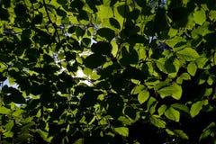 Luifel in het bos Royalty-vrije Stock Foto