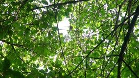 Luifel van bomen stock footage