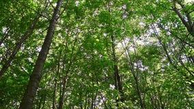 Luifel van bomen stock videobeelden