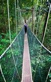 Luifelgang Borneo stock afbeeldingen