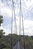 Luifelgang door het Regenwoud Royalty-vrije Stock Foto