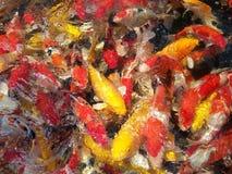 luim carpfish stock afbeelding