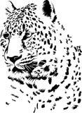 Luipaard Royalty-vrije Stock Foto