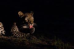 Luipaard bij nacht Stock Foto