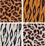 luipaard en tijgerpatronen Stock Fotografie