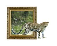 Luipaard in kader met 3d effect Royalty-vrije Stock Fotografie