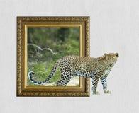 Luipaard in kader met 3d effect Stock Afbeeldingen