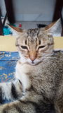 Luipaard of Kat Stock Fotografie