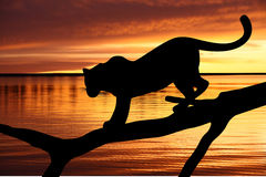 Luipaard op een tak dichtbij een water royalty-vrije illustratie