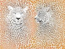 Luipaardpatroon met hoofd - voorraad stock afbeelding