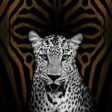 Luipaardportret Royalty-vrije Stock Foto's